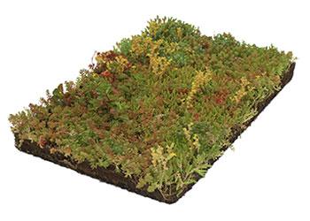Onderhoudsvriendelijke Tuin Aanleggen : Onderhoudsvriendelijke tuin laten aanleggen tuinid bremer